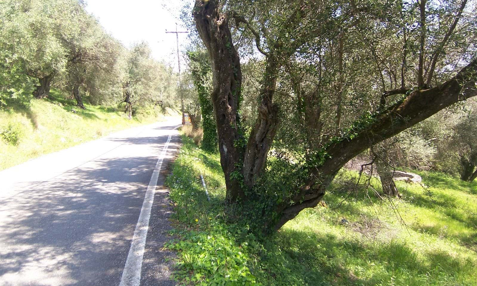 olive grove for sale