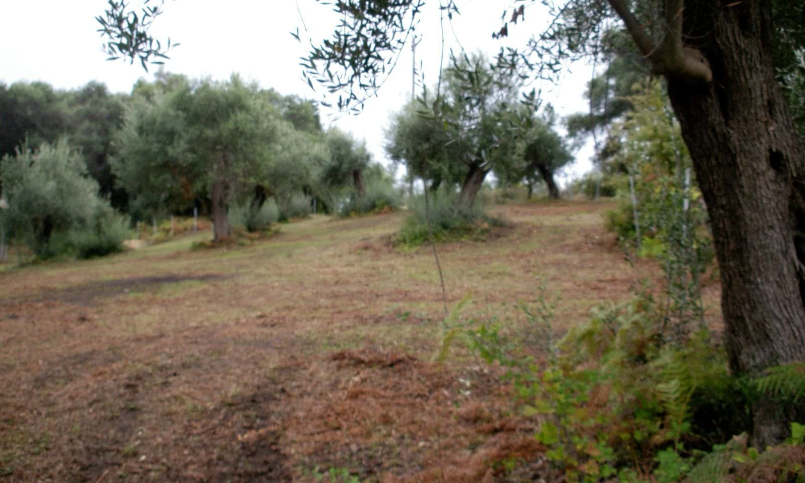 Building land for sale north Corfu