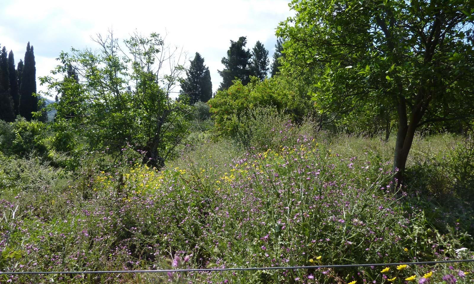 Corfu building land for sale