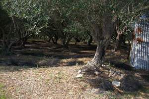 OLIVE GROVE LAND, Halikouna