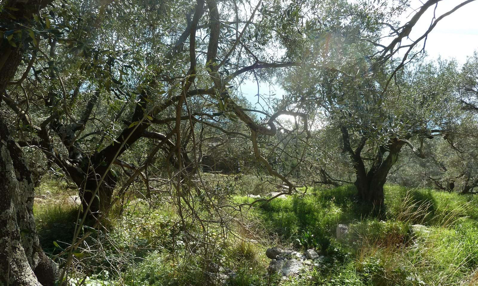 Land for sale north east Corfu