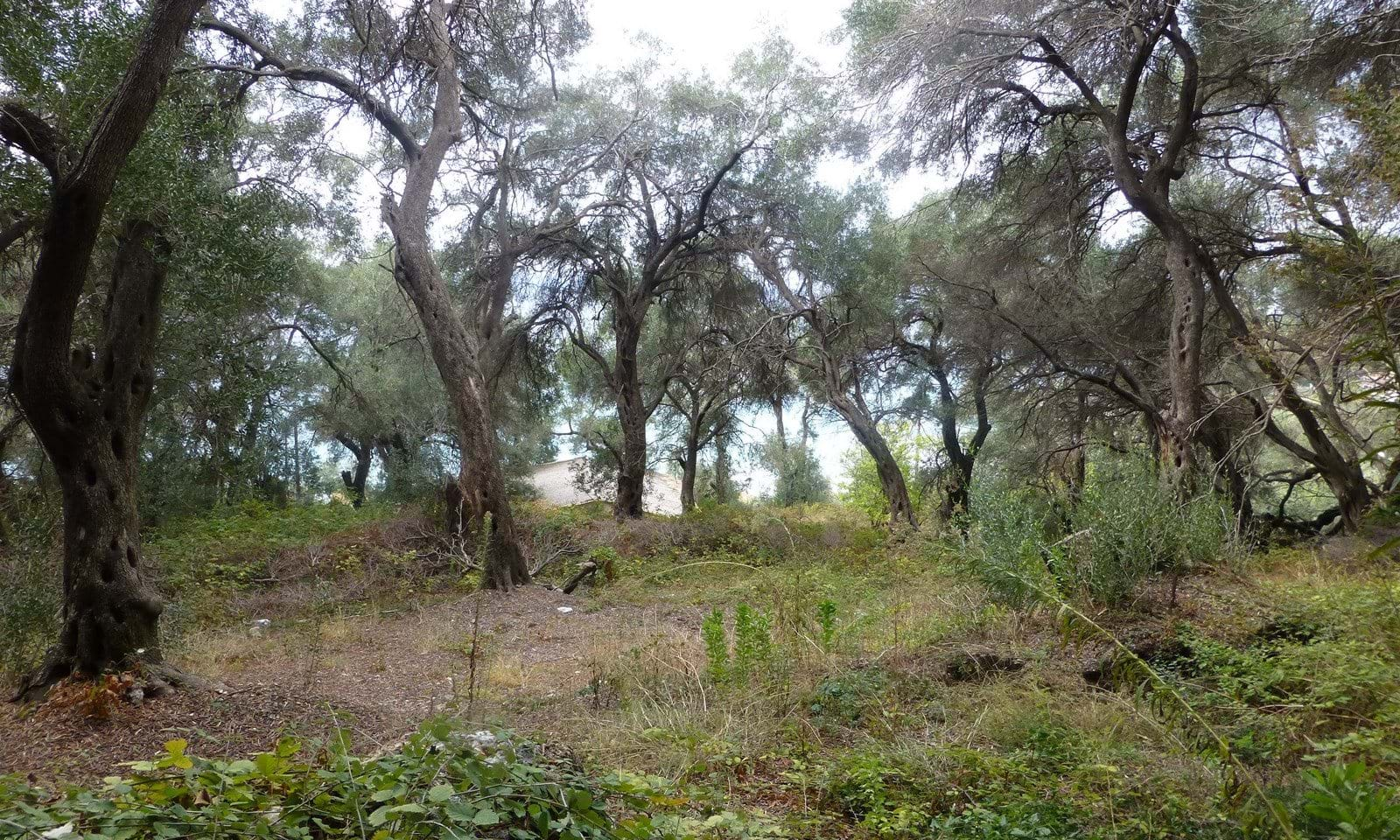 Land for sale Pelekas Corfu