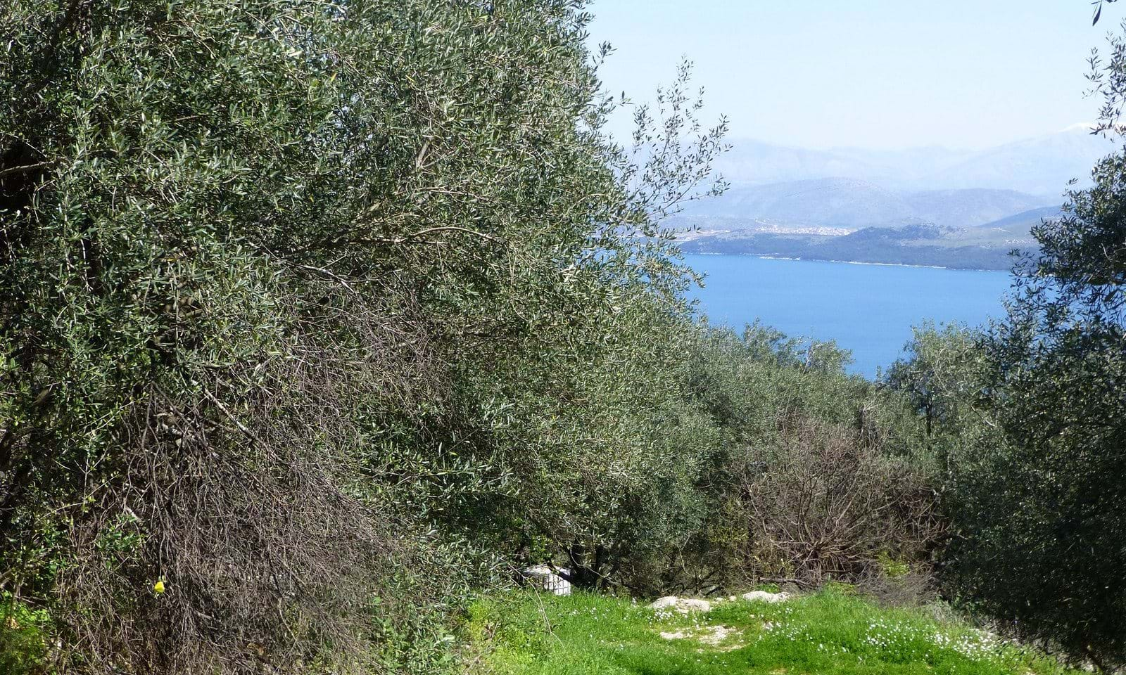 Building land for sale in North east Corfu