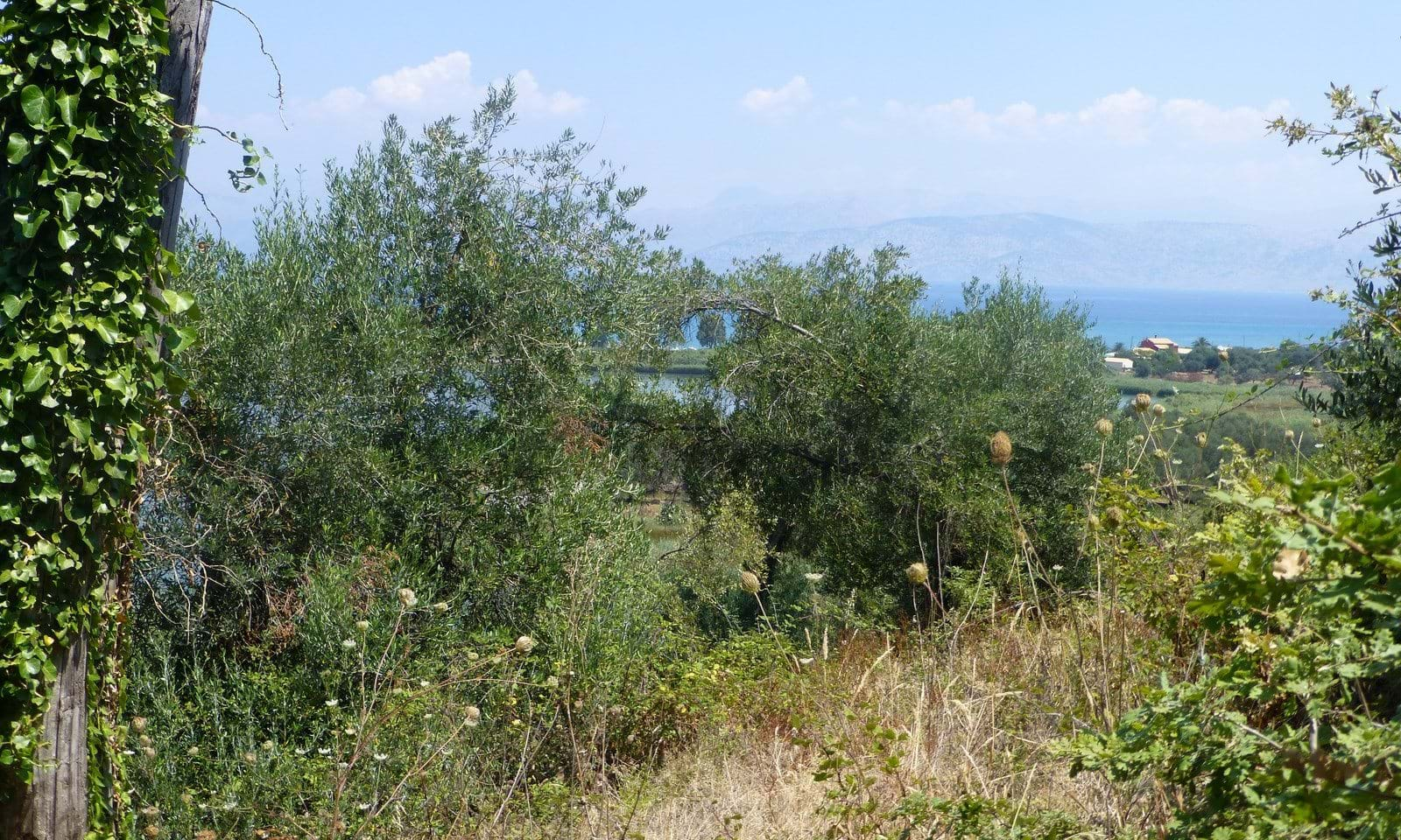 Agios Spiridon land for sale