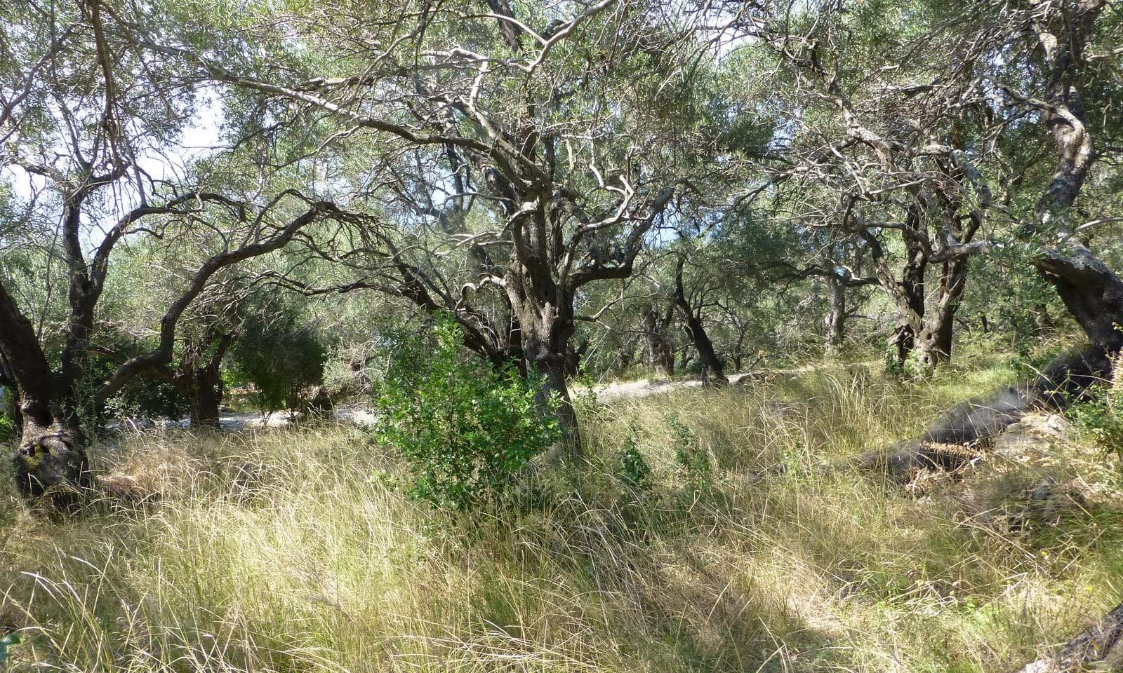 Building land for sale in Corfu Greece