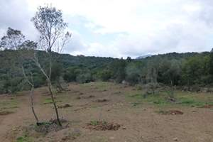 NEW OLIVE TREE LAND, Ano Korakiana