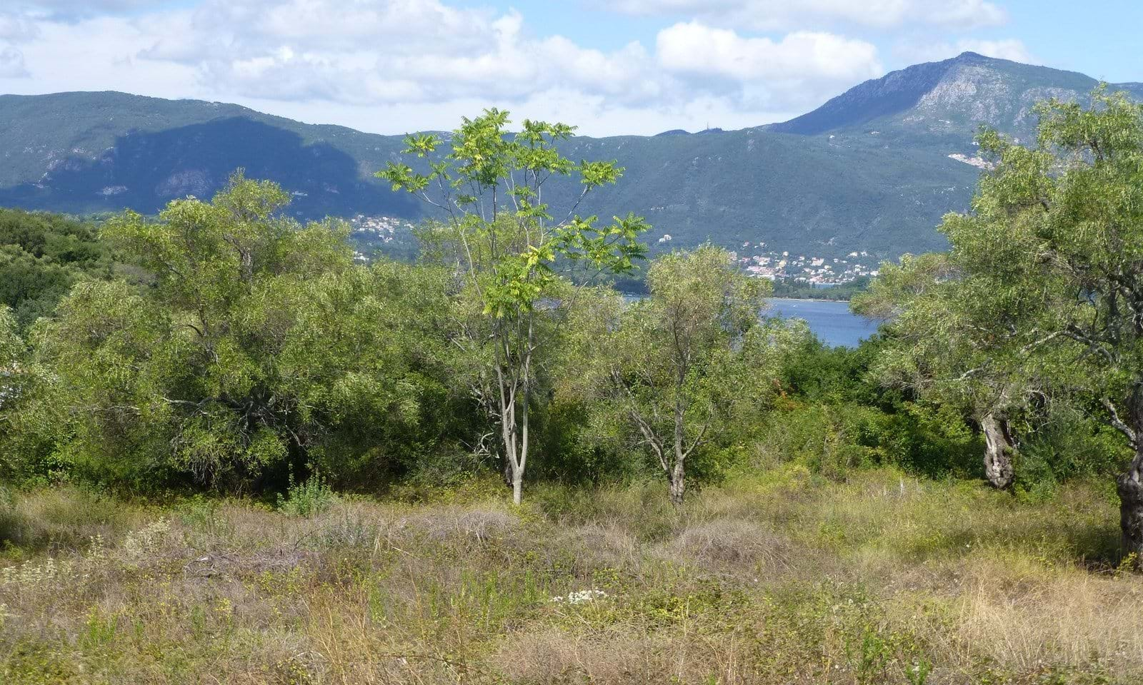 Land for sale in Kommeno Corfu