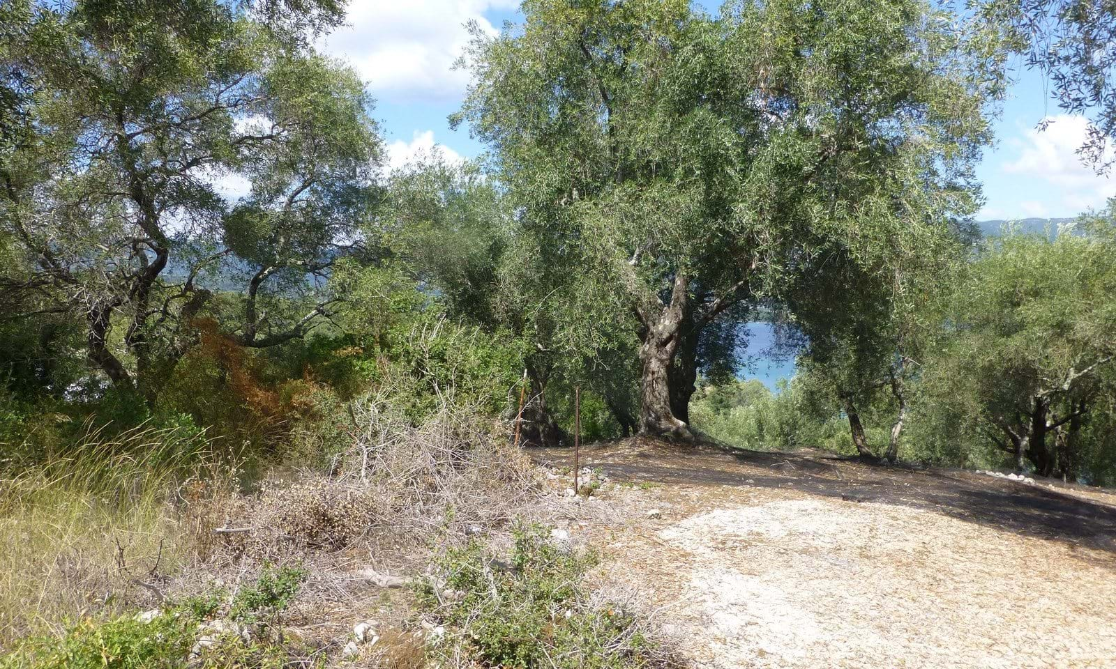 Property for sale in Kommeno Corfu