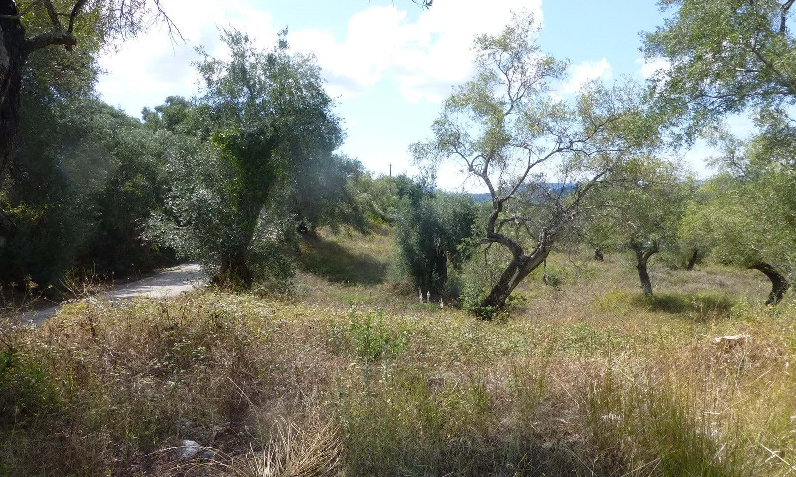 Building land for sale in central Corfu