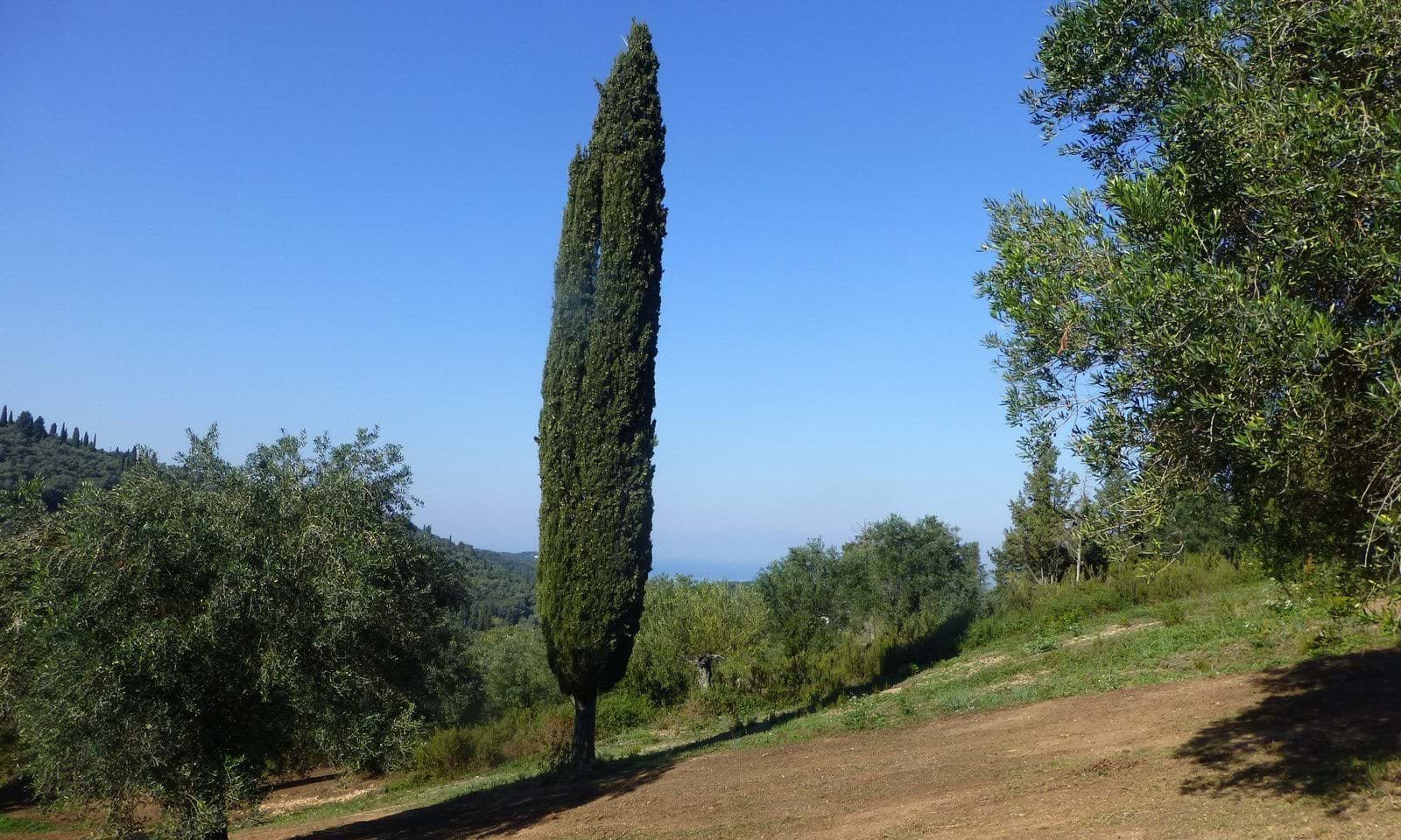 North East Corfu land for sale