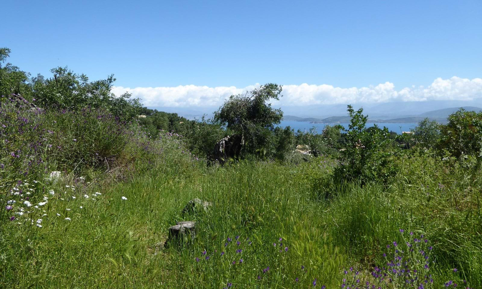 Land for sale in the north east of Corfu