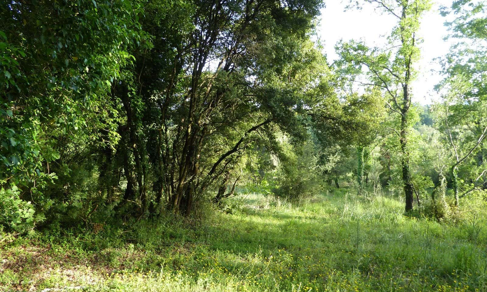 Land and property for sale in Corfu