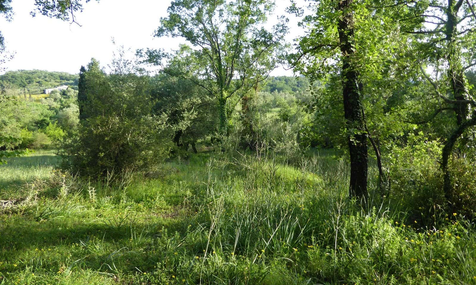 Countryside land for sale in north Corfu