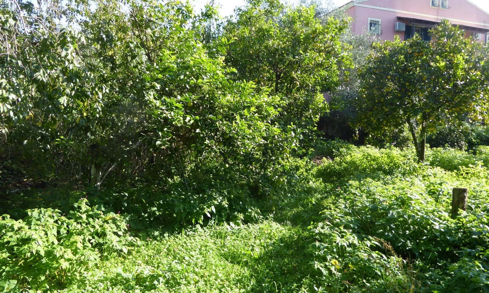 Houses for sale in central Corfu
