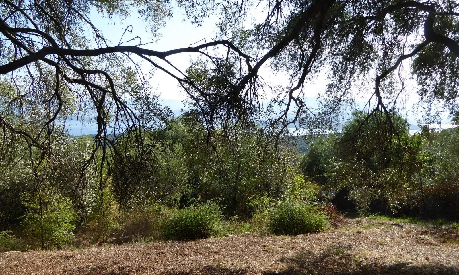 Sea view land for sale in north east Corfu