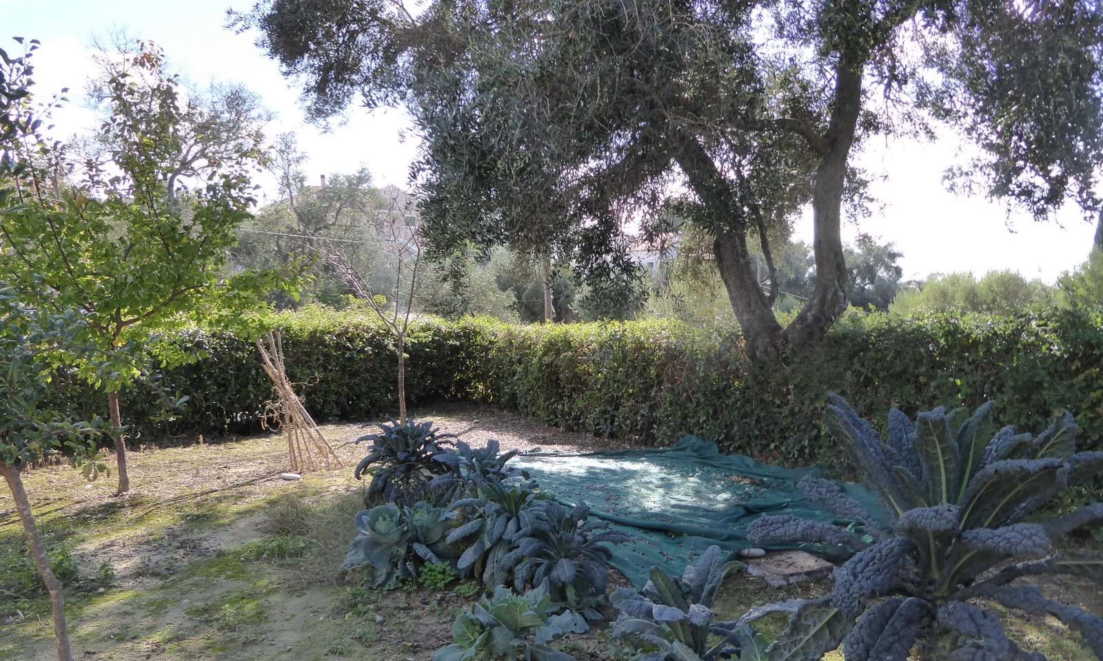 House for sale in Afionas Corfu