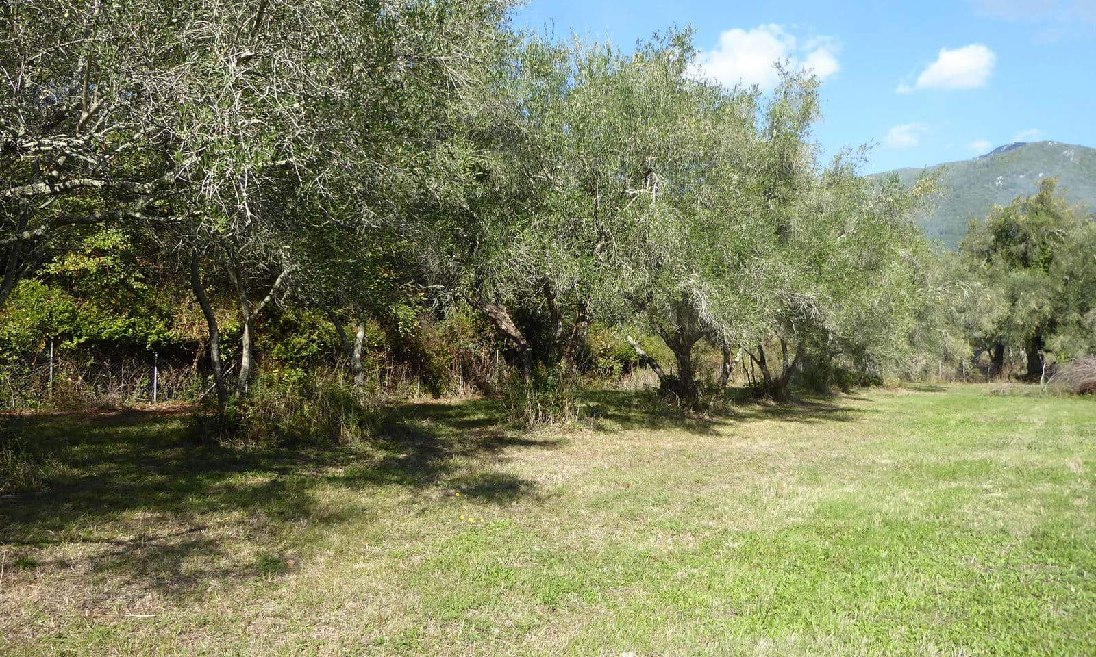 Land for sale in Corfu near the sea