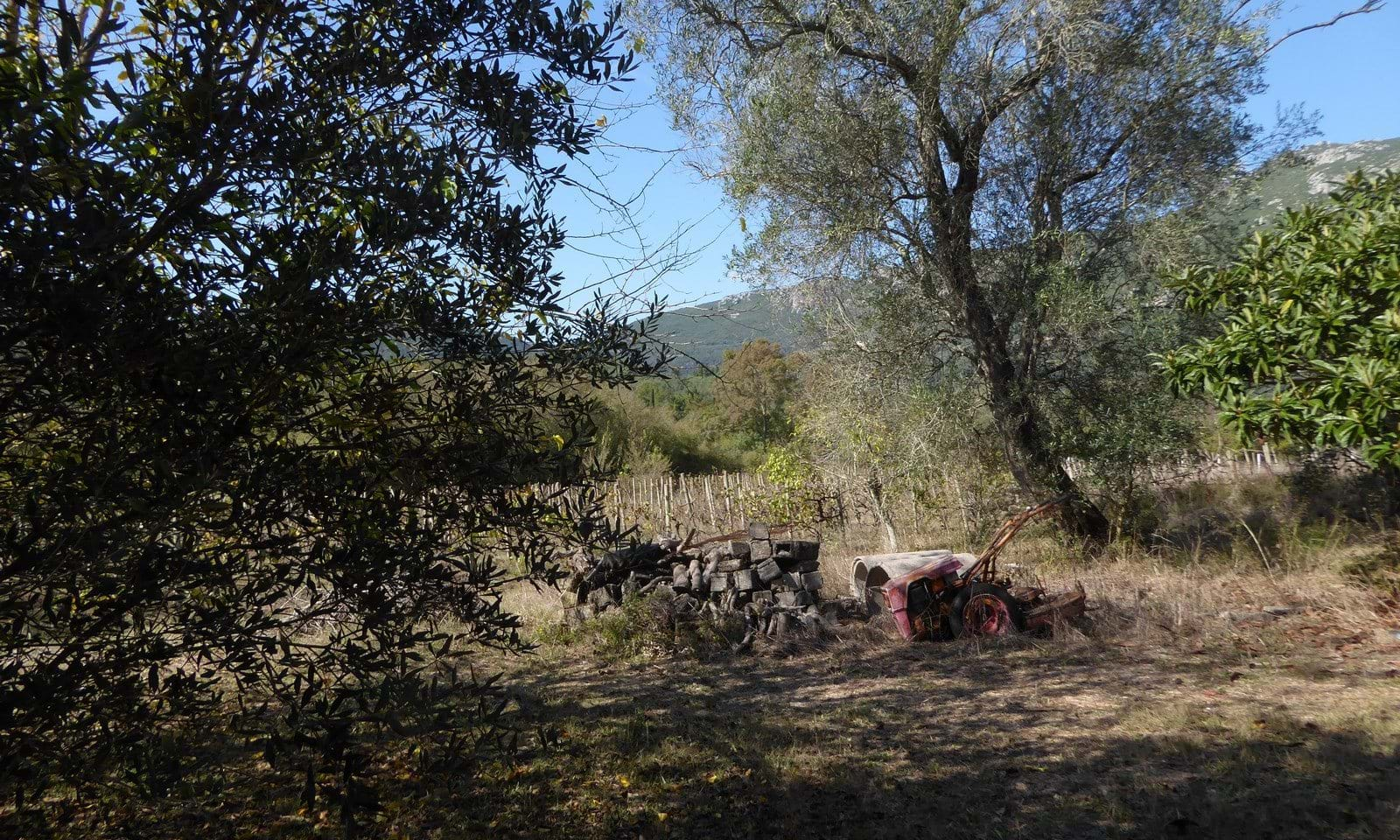 Land and house for sale in Skripero Corfu