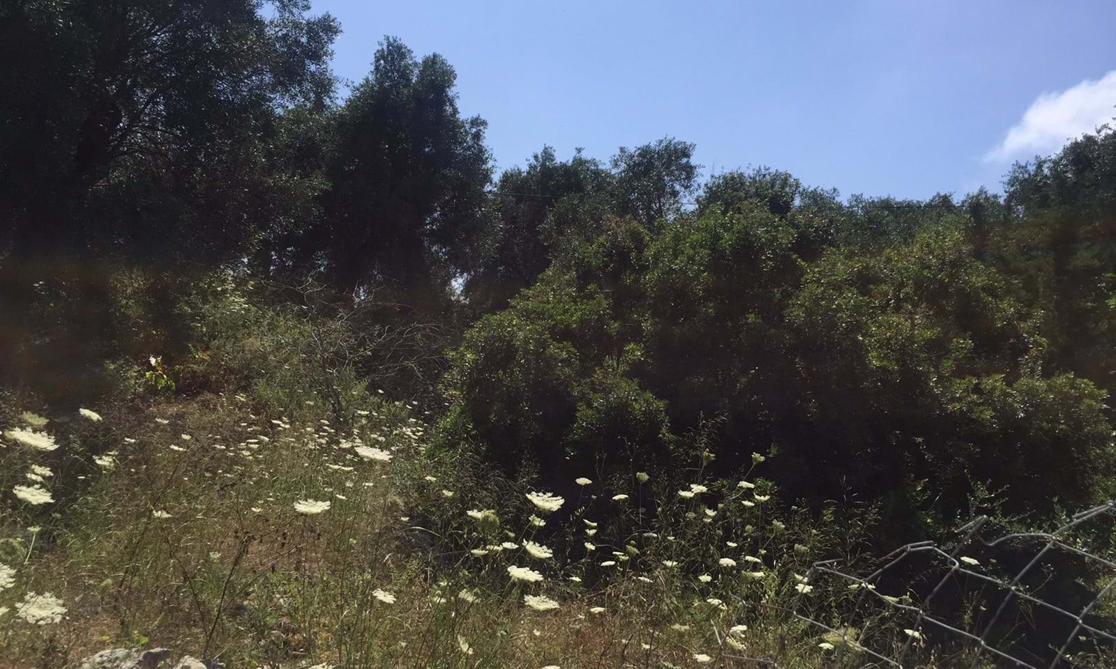 Land for sale near Lakka, Paxos