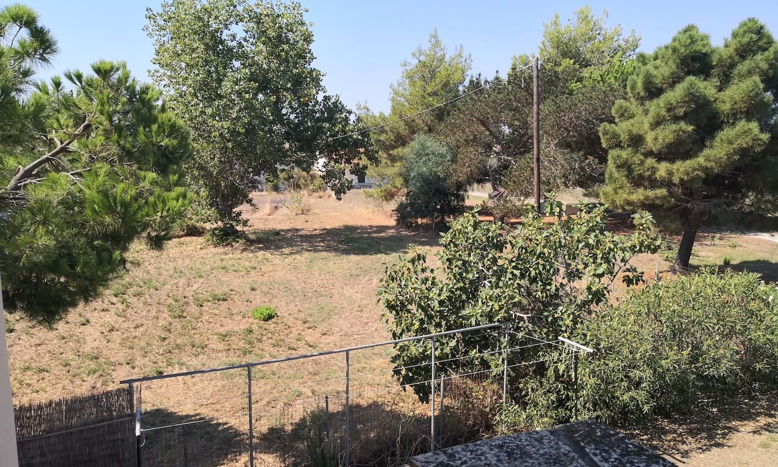 olive grove surrounding the house